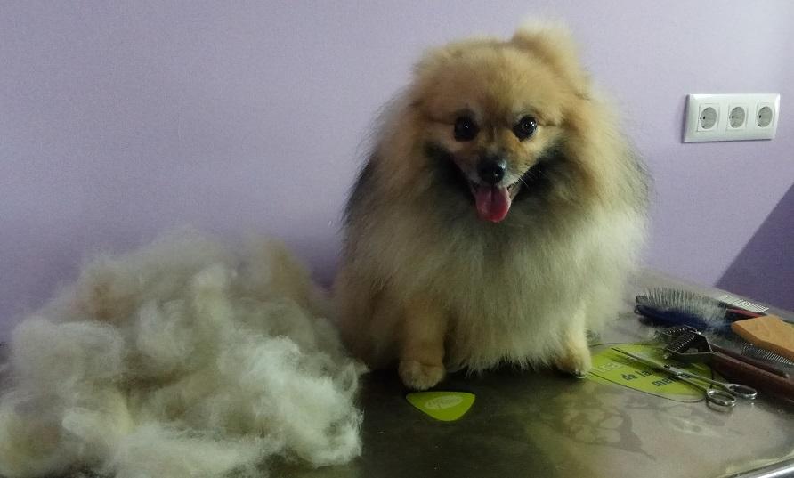Resultado de imagen de deslanado perro